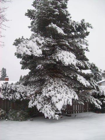 bigfallingsnowtree