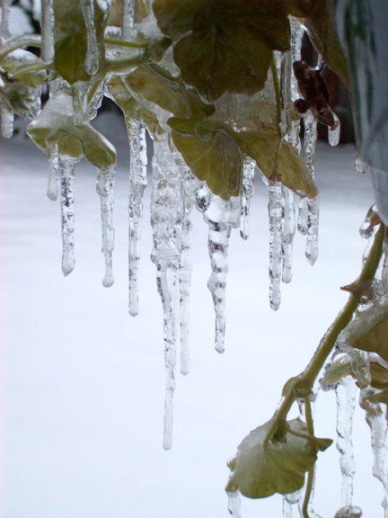 icicleleaves