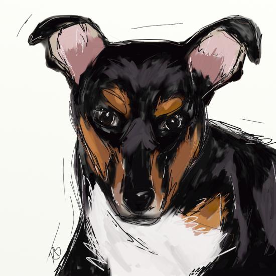 DogDixie